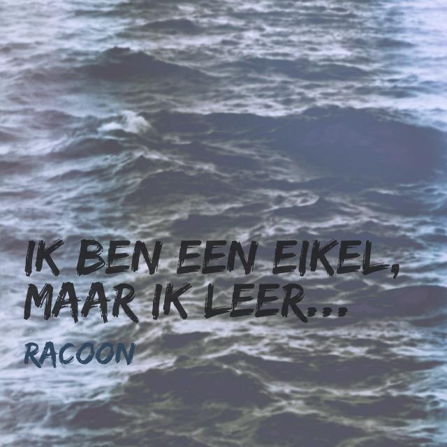 Oceaan - Racoon